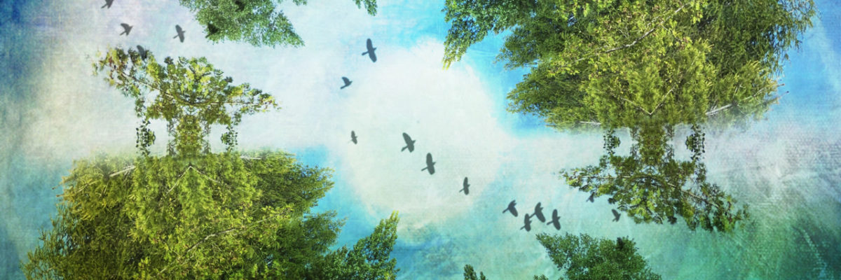image for the Story Wall Instagram Feed for River Revery circular edit of cedar trees with birds flying across and through the centre of the ring of trees