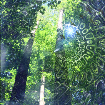 looking up into the Carolinian forest canopy with superimposed primal forest image