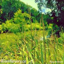 How River Revery began….