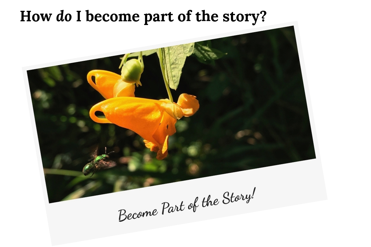 image for How do I become part of the story?