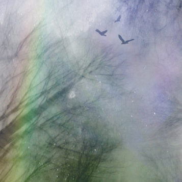 image from multimedia animation of spinning treetops birds above and prism light