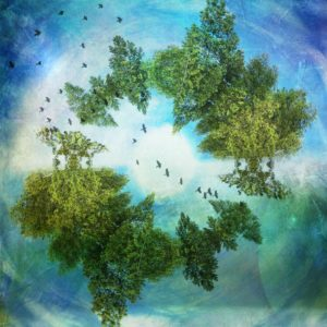 Wishing Well image with birds eye view of a circle of trees, birds flying across the middle, textured blues background
